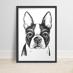 Placa 21x29,7cm MDF 3mm Adesivada - Cachorro Boston Terrier
